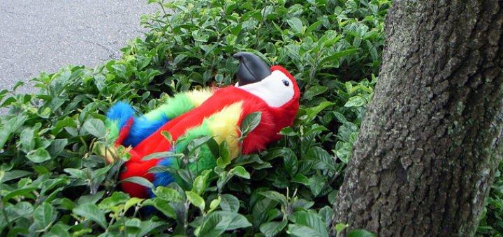 4000163464_3384272ae9_b_stuffed-parrot